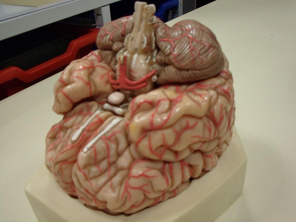Les effets sur le corps emdl euthanasie mourir dans for A l interieur du corps humain
